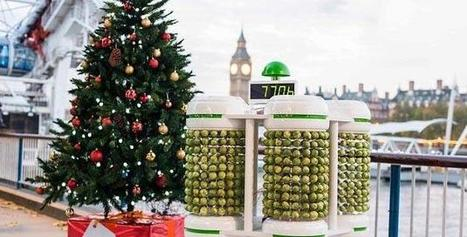 UK: Albero di Natale con luci alimentate a verdure - PianetaCellulare.it | Londra in Vacanza - London on holiday | Scoop.it