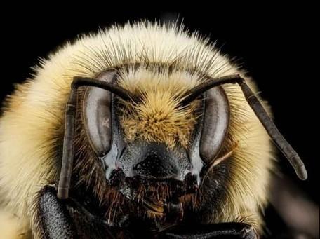 Breathtaking Macro Portraits of Bees by Sam Droege   tecnologia s sustentabilidade   Scoop.it