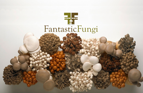 Fantastic Fungi: The Forbidden Fruit (Video) | Live different taste the difference | Scoop.it