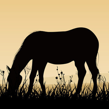 10 Important Facts About The Cost of Horse Ownership | Farming and the Countryside | Scoop.it