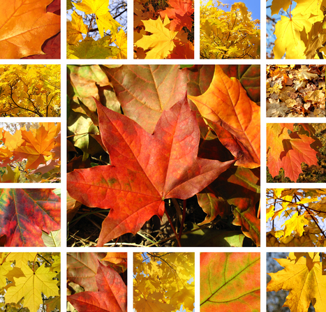 Fall lessons? We've 'G-autumn'! | Homework Helpers | Scoop.it