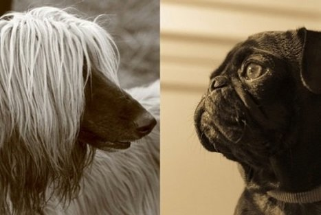 Do dogs recognize other dogs as dogs? | Dog Pictures - Pindoggy | Scoop.it