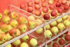 Schlechte Stimmung: Biobranche besorgt über Billigkonkurrenz   Agrarforschung   Scoop.it