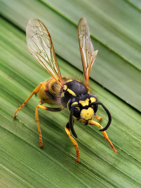 Top 10 Wasp Facts for summer 2014   pest control   Scoop.it
