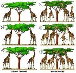 Ciencia en palabras 9/ Las jirafas de Lamarck, los gemelos, el cáncer y la guerra en Holanda (apuntes sobre epigenética). | Curso SEP + Bunam | Scoop.it