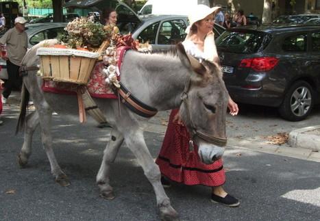 INSOLITE Des journées nationales pour le retour de l'âne de ... - Objectif Gard   Cheval Orne   Scoop.it