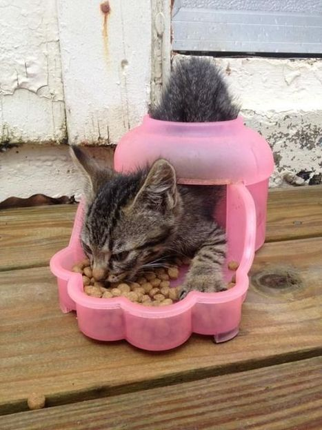 This is not how the cat food dispenser is meant to work. Silly kitty | FanPhobia - Celebrities Database | Funny | Scoop.it