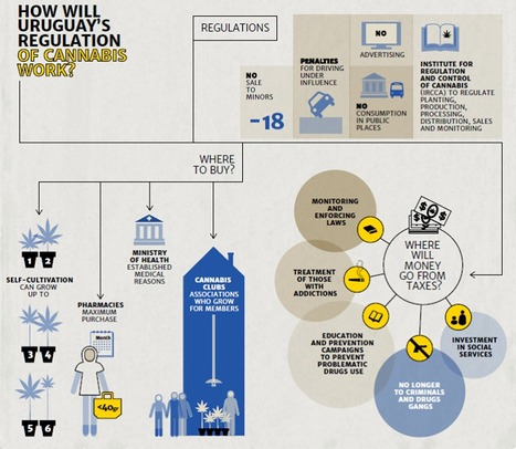 INFOGRAPHIC: Could this be a model for the regulation of ALL drugs? | Drugs, Society, Human Rights & Justice | Scoop.it