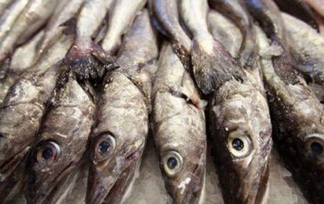 Los ácidos grasos del pescado protegen frente al cáncer de mama | Salud | Scoop.it