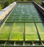 Valorisation des microalgues : du potentiel à la diversité des applications. | Maraichage-Horticulture | Scoop.it