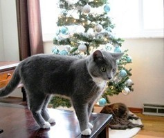 Bunny's Blog: We Wish You a Meow-y Christmas | Pet News | Scoop.it