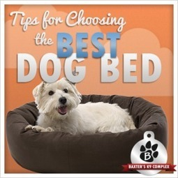 Tips for Choosing the Best Dog Bed | The Dog Blogger | Scoop.it