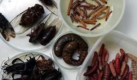 Información General - 04 de junio de 2013 - Para científicos platenses los insectos también pueden ser ricos- Diario El Día, La Plata, Argentina | Posgrados | Scoop.it