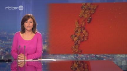 RTBF JT ⎥Les coccinelles asiatiques nous envahissent... | L'actualité de l'Université de Liège (ULg) | Scoop.it