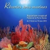 Rêveries sous-marines, la photo sous-marine par ITO Akiyoshi | The Blog's Revue by OlivierSC | Scoop.it