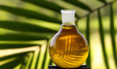 Sustainable palm oil deal brings 100% target closer | Sustainability in business | Scoop.it