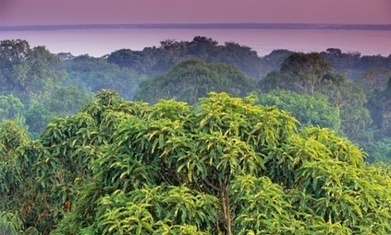 Forests are emerging out from the shadow of fossil fuels in climate debate | Forests | Scoop.it