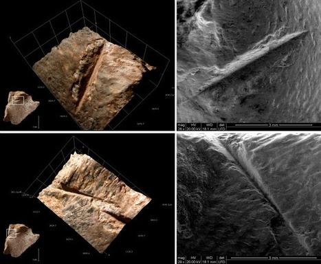 Las tortugas eran un alimento complementario en la dieta humana hace 400.000 años | Arqueología, Historia Antigua y Medieval - Archeology, Ancient and Medieval History byTerrae Antiqvae (Blogs) | Scoop.it