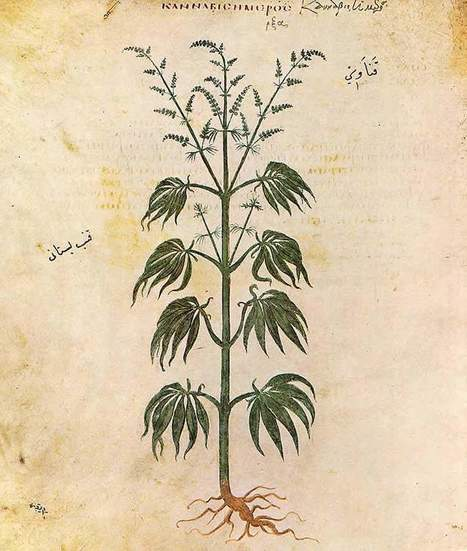 Nicotine Changes Marijuana's Effect on the Brain | ayahuasca | Scoop.it