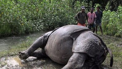 Nepal arrests 14 over rhino poaching | Wildlife and Environmental Conservation | Scoop.it