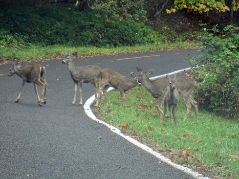 Watch Out For Animals Along The Roadways | Winks Body Shop | Scoop.it