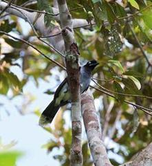 Wildlife Extra News - 15 new species of birds discovered in Brazil | Wildlife and Environmental Conservation | Scoop.it