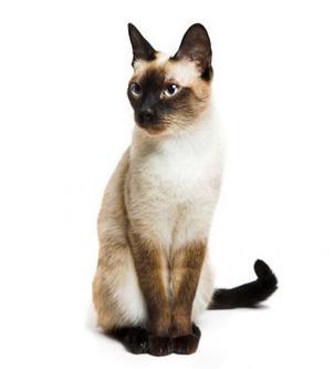 ¿Cómo se giran los gatos al caer? | I didn't know it was impossible.. and I did it :-) - No sabia que era imposible.. y lo hice :-) | Scoop.it