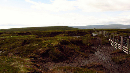 Peat Wars: Ancient Bogs Can Be a Miracle Plant Food and a Precious Carbon Sink | Bogs and their Surrounding Biomes | Scoop.it