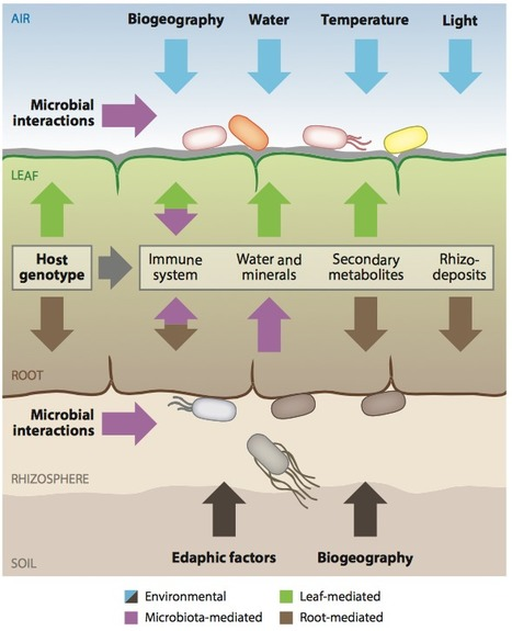 The Plant Microbiota: Systems-Level Insights and Perspectives - Annual Review of Genetics | Interaction, and more... | Scoop.it