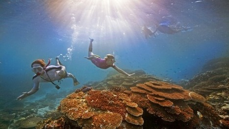 Will the Great Barrier Reef be declared endangered by the UN? | Year 12 Geography | Scoop.it