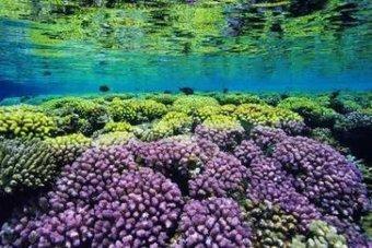 À la découverte des aquariums de France | Seniors | Scoop.it