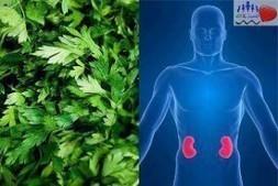 Un bouquet de persil pour nettoyer les reins et renforcer notre système immunitaire. | Nutrition | Scoop.it