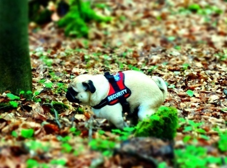 Diarrhea in dogs - How my dog stays healthy part 3/33 - Tips for dog's health | Health | Dog | Tonys Blog - Everything around dogs & travel | Pugworldtrip | Dog Love | Scoop.it