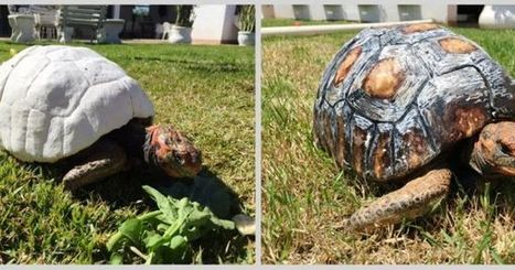 Fred the Tortoise Gets New Shell, Thanks to 3D Printing | iPads, MakerEd and More  in Education | Scoop.it