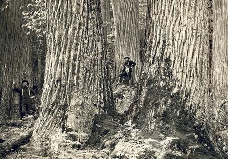 Plant science: The chestnut resurrection | Plant Breeding and Genomics News | Scoop.it