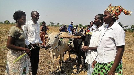 Heifer International: Building Naturally Sustainable Communities - Organic Connections | Environmental Innovation | Scoop.it