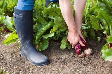 Il social network per contadini in erba | Social media culture | Scoop.it
