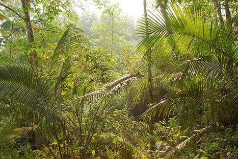 Les forêts «rurales» soutiennent des activités socio-environnementales saines – scientifiques   agrophil   Scoop.it