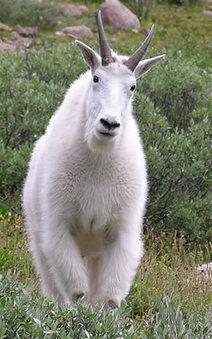 Wildlife in Alaska | Alaska | Scoop.it