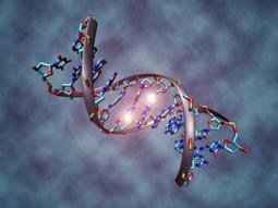 El aprendizaje de la vida se refleja en el ADN | Neurociencias y Aprendizaje | Scoop.it