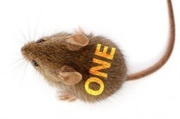 Take Away This One Gene and Mice Live Long and Lean - The Epoch Times | leapmind | Scoop.it