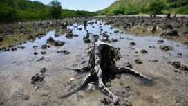 Rice and palm oil risk to mangroves - BBC News | iGCSE | Scoop.it