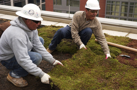 Green Roofs Program Info | anacostiaws.org | Vertical Farm - Food Factory | Scoop.it