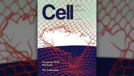 Científicos argentinos descubren avances en la lucha contra el cáncer  | Biología, Cáncer, Ciencia, Estudio científico, Medicina, Premio Nobel | Argentinos destacados en el mundo! | Scoop.it