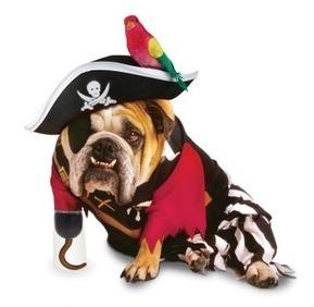 Divertida fiesta de Halloween en favor de los animales | Universo Mascota | Scoop.it