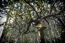 Painterly Birdhouse | Recalibration Photography | Scoop.it