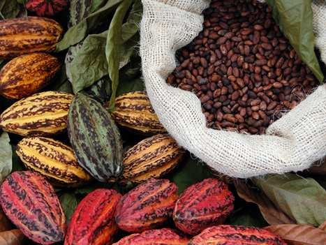 Hershey's and Mars sweeten market for West African cocoa farmers | Food & Sustainability | Scoop.it