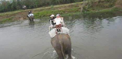 Chitwan Jungle safari   Adventure Trekking in nepal   Scoop.it