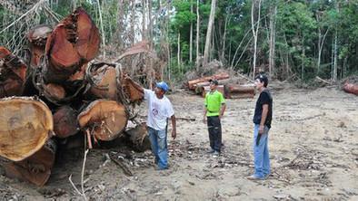 Brasil busca arrancar de raíz la tala ilegal. Cuando pensábamos que solo los profesores de inglés eran responsables de la deforestación... | el medio ambiente | Scoop.it