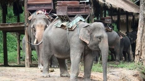 Animal rights groups call for end to wildlife tourism, saying tourists unaware ... - Yahoo!7 News | GarryRogers NatCon News | Scoop.it